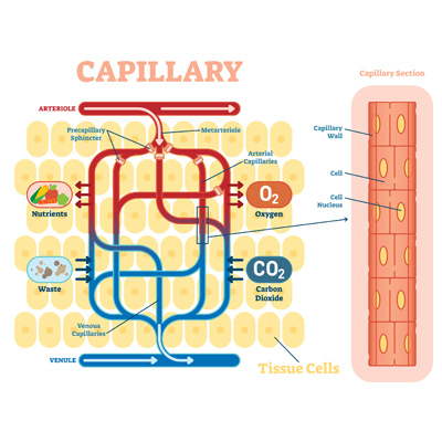 Azioni della Carbossiterapia sulla Circolazione